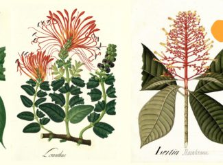 Moments in a plant's life - Botanical Expedition